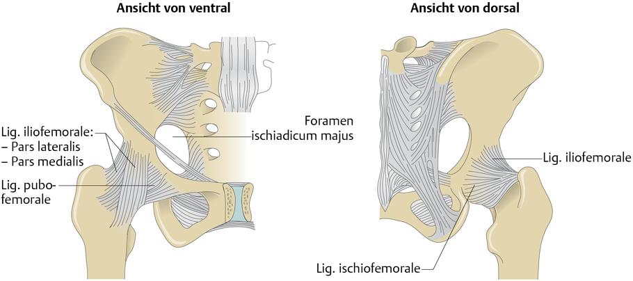 Hüftgelenk (Articulatio coxae) - via medici