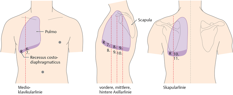 Projektionen von Lunge und Pleura - via medici