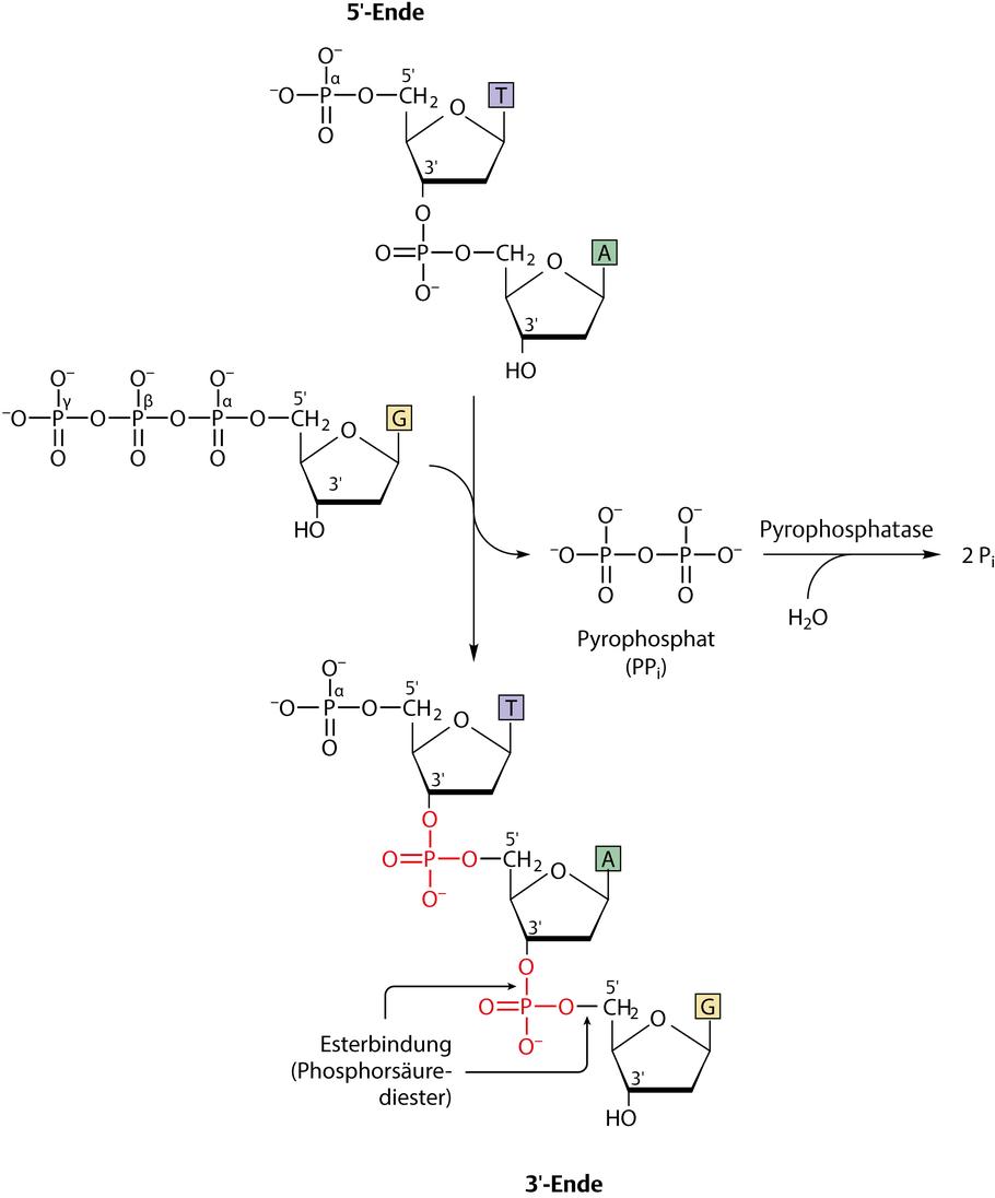 verdauung kohlenhydrate enzyme
