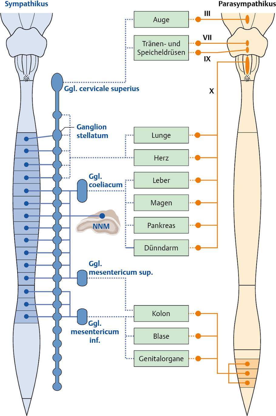 physiologie verdauung