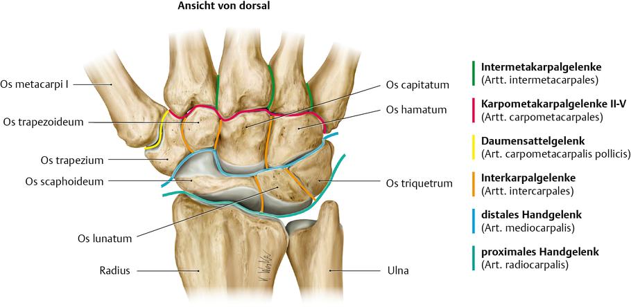 Gelenk (Anatomie)