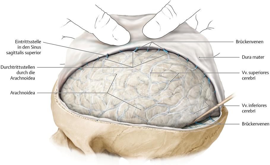 Hirn- und Rückenmarkhäute (Meningen) - via medici
