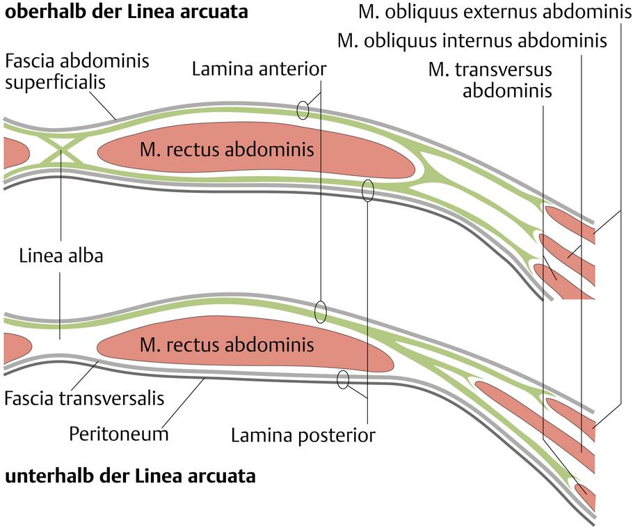 Bauchwand - via medici