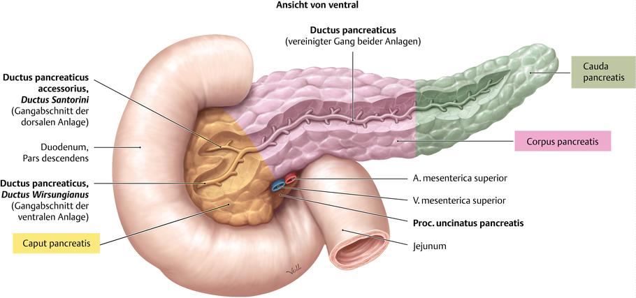 Bauchspeicheldrüse (Pancreas) - via medici